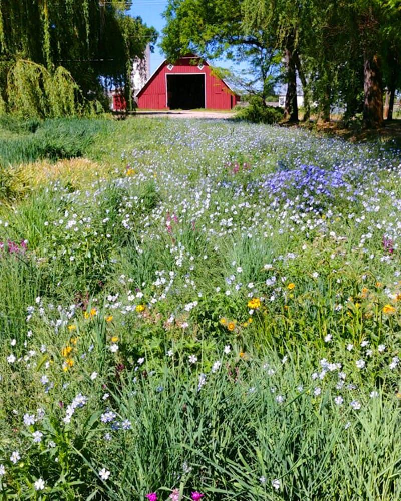 https://www.savethebee.org/wp-content/uploads/2021/08/pollinator-meadow.jpg
