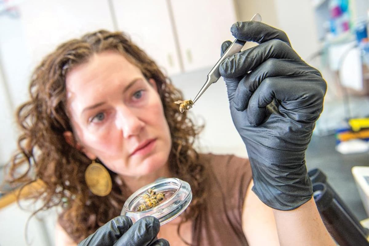 https://www.savethebee.org/wp-content/uploads/2021/08/scientist-with-bee.jpg