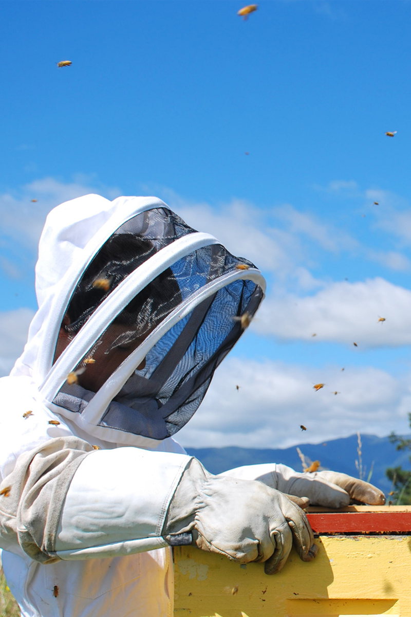 Young beekeeper working a hive